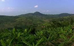 RWANDA, LES COLLINES PARLENT – extraits